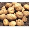 Potato from Shandong