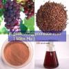 Grape Seed P.E.