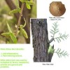 White Willow Bark Extract/Salicin (HPLC)