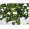 dehydrated broccoli for sell