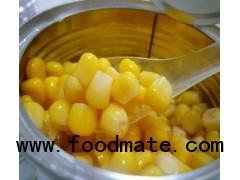 Chinese Canned Baby Corn Whole
