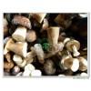 Frozen Boletus Edulis (Kind Bolete) Whole Mushroom Grade A(4-6CM) 121103