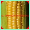 CANNED YELLOW MAIZE