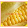 YELLOW MAIZE SOYA MEAL
