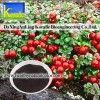 Lingonberry Extract(5%-70% Anthocyanin)