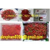 fresh red chilli /hot red pepper/ capsicum/ frozen chilli