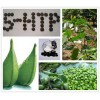 5-HTP Griffonia Seed Extract