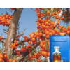 Sea buckthorn fruit/seed oil