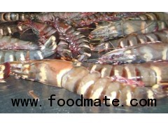 Buy Giant Tiger Shrimp