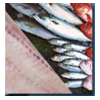 Frozen fish - hake, croaker, salmon, mackerel and others