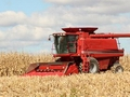Corn harvest begins in Southern US