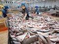 EU supports Vietnam for pangasius supply chain project