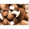 Shitake Mushroom Extract (Polysaccharides)