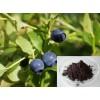 Bilberry Extract-Anthocyanidin
