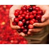 Granberry-Anthocyanidins