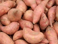 Mozambique government develops new sweet potato varieties