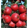 Natural Hawthorn Extract