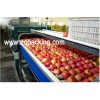 Fruit Paste ,Fruit sauce making machine ,Fruit paste processing line ,Furit sauce production line