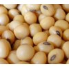 Soya Beans, White Kidney Beans, Red Beans, Black Beans and Mung Beans for Sale