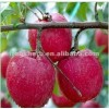 apple fruit jucie powder maker