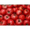 hot sell tomato paste with competitive price
