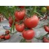 36-38% brix tomato paste bulk/canned