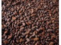 Cocoa Shortage Looms As Growers Opt To Farm Rubber: Commodities
