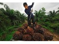 Mondelez International Shares Sustainable Palm Oil Action Plan