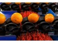 New series of RDS sorting machines perfect for citrus fruits