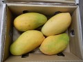 Special Fruit starts new season of Pakistan mangos