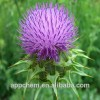 Pure Milk Thistle Extract/Silymarin/Silybin/Water Soluble Silymarin