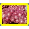 COMMON FRESH RED ONION