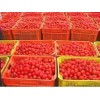 140g Hot Sale Tinned Tomato Paste, Xinjiang Factory Direct Supply