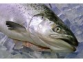 Farmed Fish Losses Tracked in New Survey