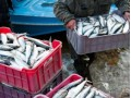 Scottish Fishermen's Federation Concerned Over Russian Import Ban