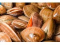 Ancient Shellfish Tell 10,000 Year History of El Niño Cycles