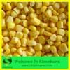 IQF Frozen Sweet Kernel Corn Grade A