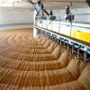 good quality Australian barley for beer making