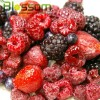 IQF fruit frozen mixed berries