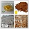 Reishi Spore Oil & Softgel
