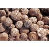 Dry Mushrooms,Dried Mushrooms,Drying Mushrooms