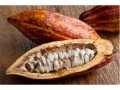 Low grind demand could choke off cocoa rally