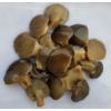 brine flat mushroom