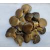 brine oyster mushroom