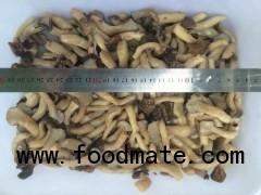 brine pleurotus cornucopiae