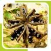 peony seed oil