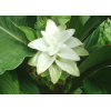 Natural Curcuma Extract (95% Curcumin) CAS NO.:458-37-7