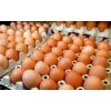 Grade A FreshChicken Brown and White Table Eggs