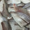 Frozen Horse Mackerel,Horse Mackerel,Frozen Seafood for sale