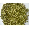 Green Mung Beans- Best Quality